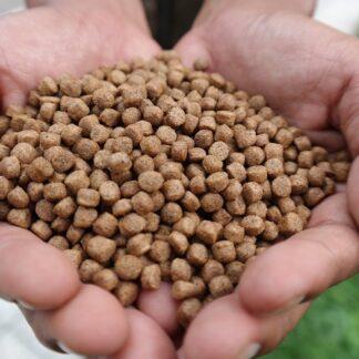 boilies - pellets